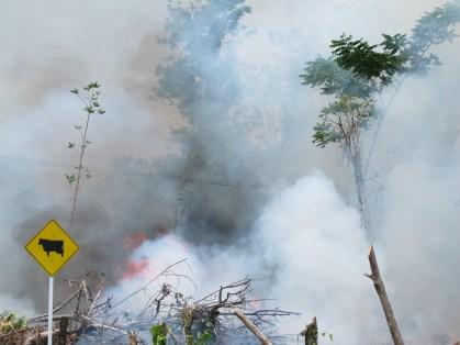 Ou comment la forêt part en fumée, Amazonie colombienne