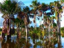 Palmes et leurs semblables