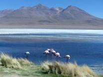 Laguna Hedionda et les flamands