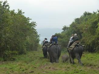 6h15 : notre tour à dos d'éléphant est terminé : un autre groupe prend le relais