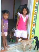 Plus d'agneaux que de petites filles sur le seuil de la maison de Susila et Masi !