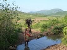 Corvée de bois pour une femme du sud de l'Orissa