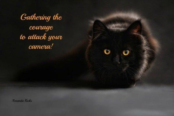 surprisinglives.net/black-cat-gathering-courage/