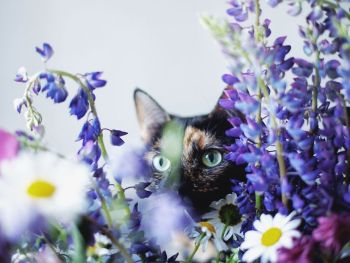 surprisinglives.net/a-summer-with-a-cat/