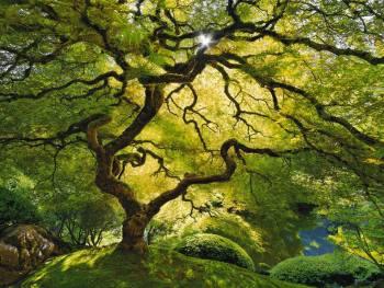 surprisinglives.net/tree-of-life