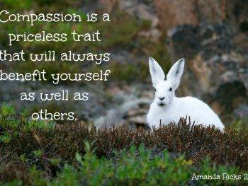 surprisinglives.net/compassion-image-quote/