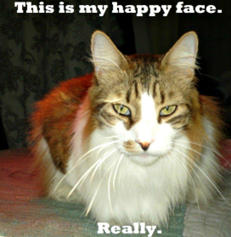 surprisinglives.net/joelle-legendre-cat/
