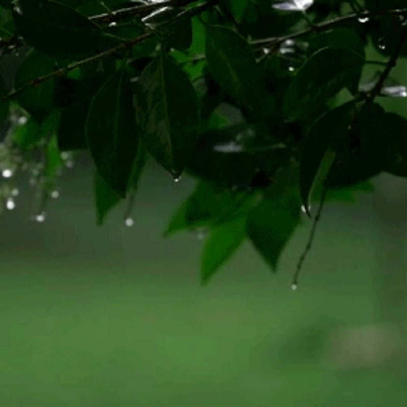 surprisinglives.net/prolific-raindrops/