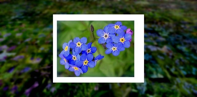 surprisinglives.net/nature-beautifully-blossoms-blue/