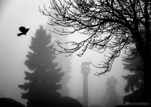 Ceata de dimineata in Timisoara