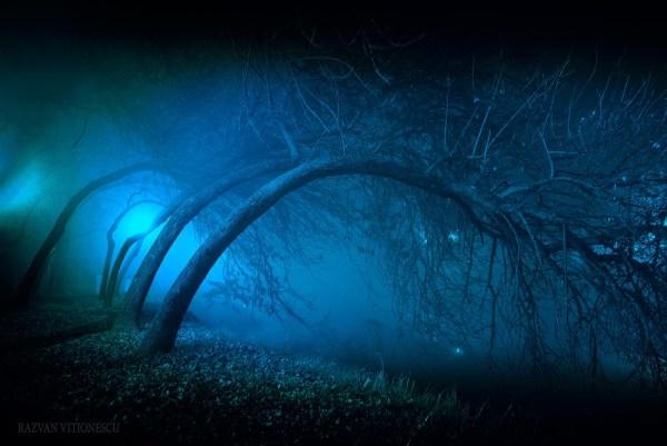 Noapte magica in Timisoara