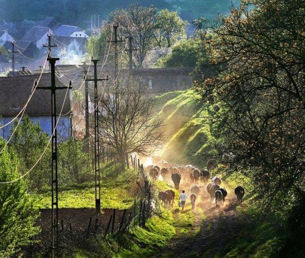 Fotografii superbe din Transilvania (fotograf Sorin Onisor)