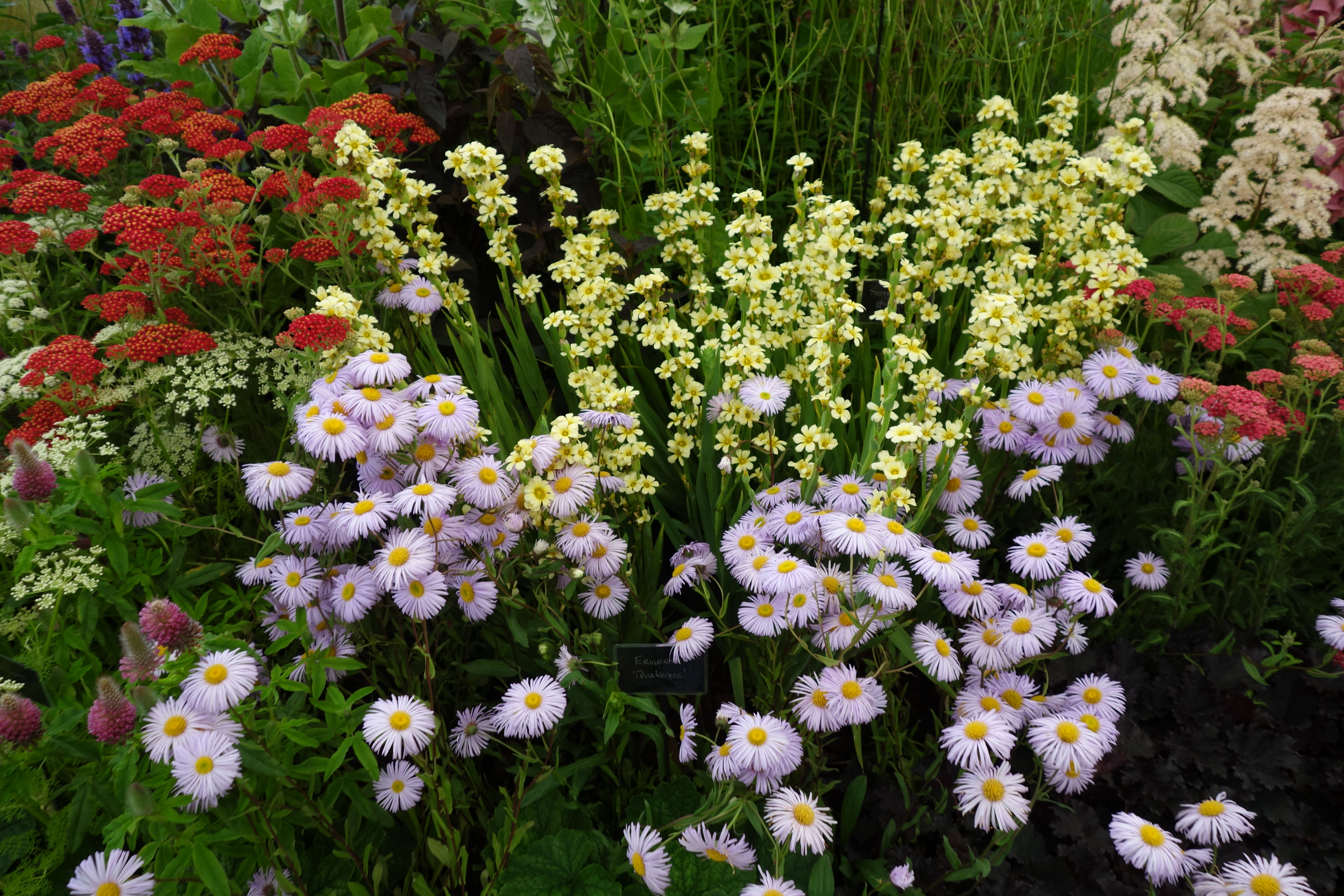 Rhs hampton court flower show 2015 the surrey edit - Hampton court flower show ...