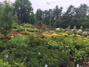 Main Line Gardens