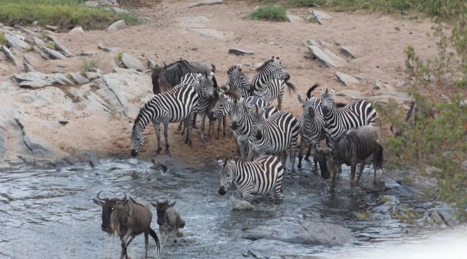 A Four-day Safari in Masai Mara, Kenya