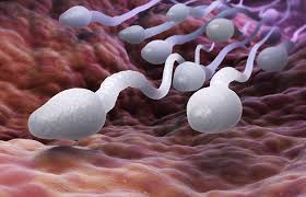 7 Things You Probably Never Knew about Sperm Reflux