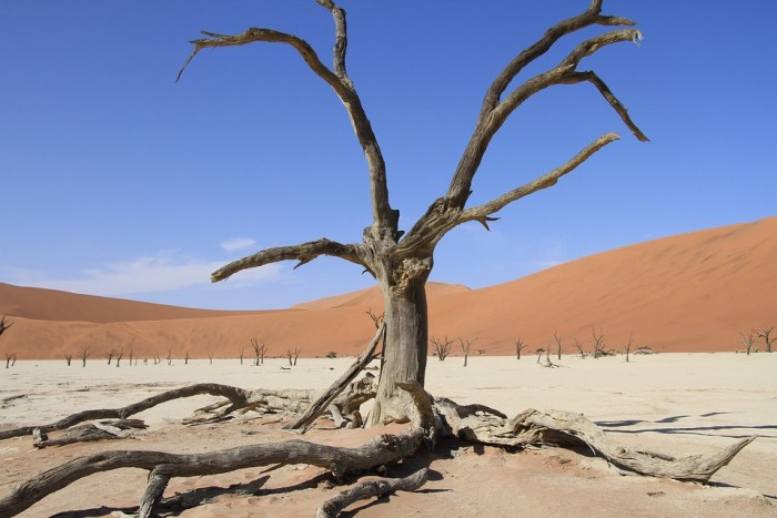 Survival Life hacks wüste
