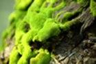 Survival Myths Moss on Tree