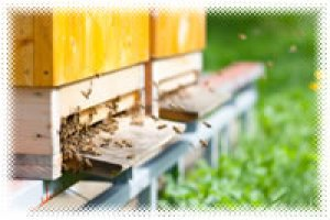 How to start homesteading today