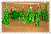 Herbs drying on string