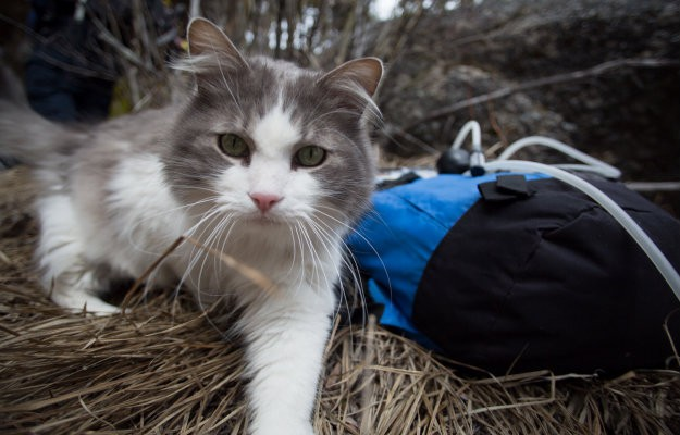Doomsday Preppers season 4 cat hunting