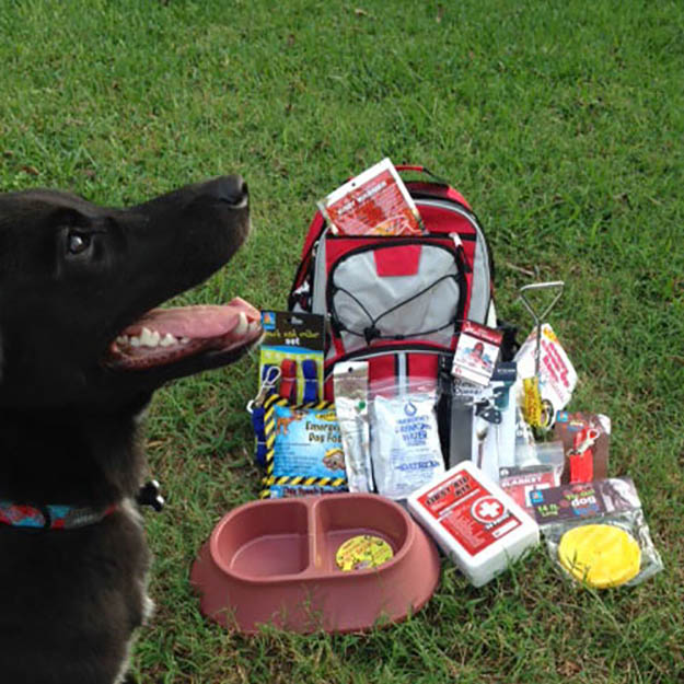 Survival Guardian Dog Kit | Stocking Stuffers for the Preppers in Your Life