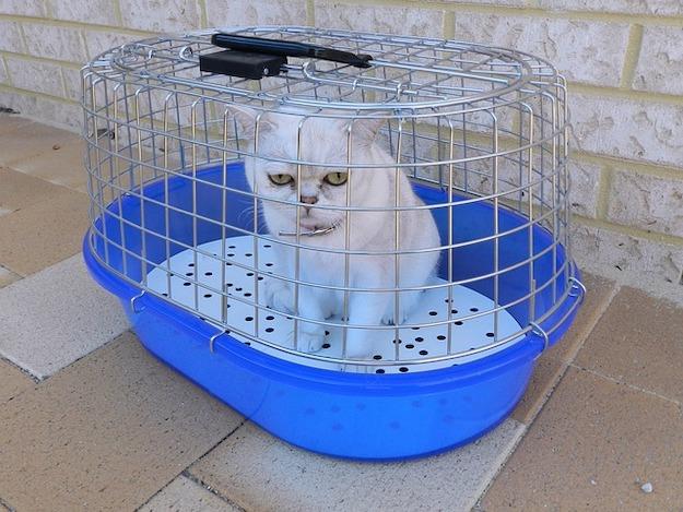 Pet Emergencies