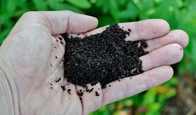 Use coffee grounds in your garden |10 Gardening Tips and Tricks That Everyone Should Know