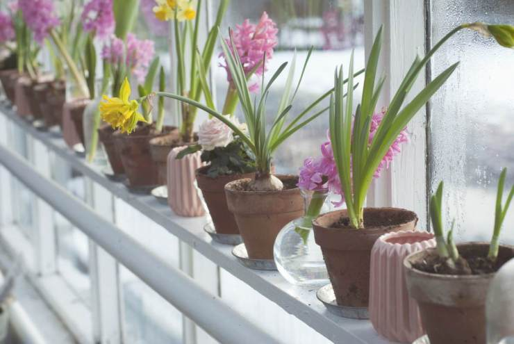 flowers blossom | DIY Greenhouses | greenhouse design ideas