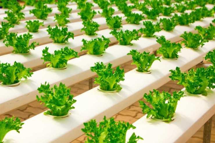 greenhouse organic farming | DIY Greenhouses | diy greenhouse cheap