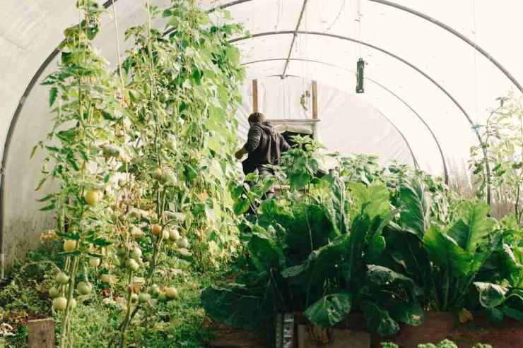 man ins greenhouse | DIY Greenhouses | greenhouse design ideas
