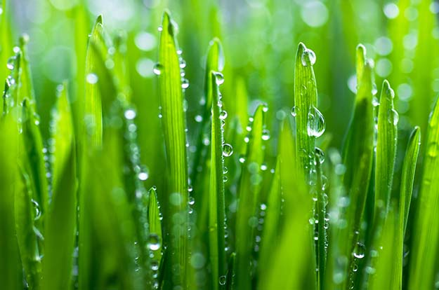 plant condensation