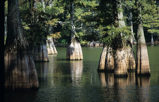 big thicket national reserve