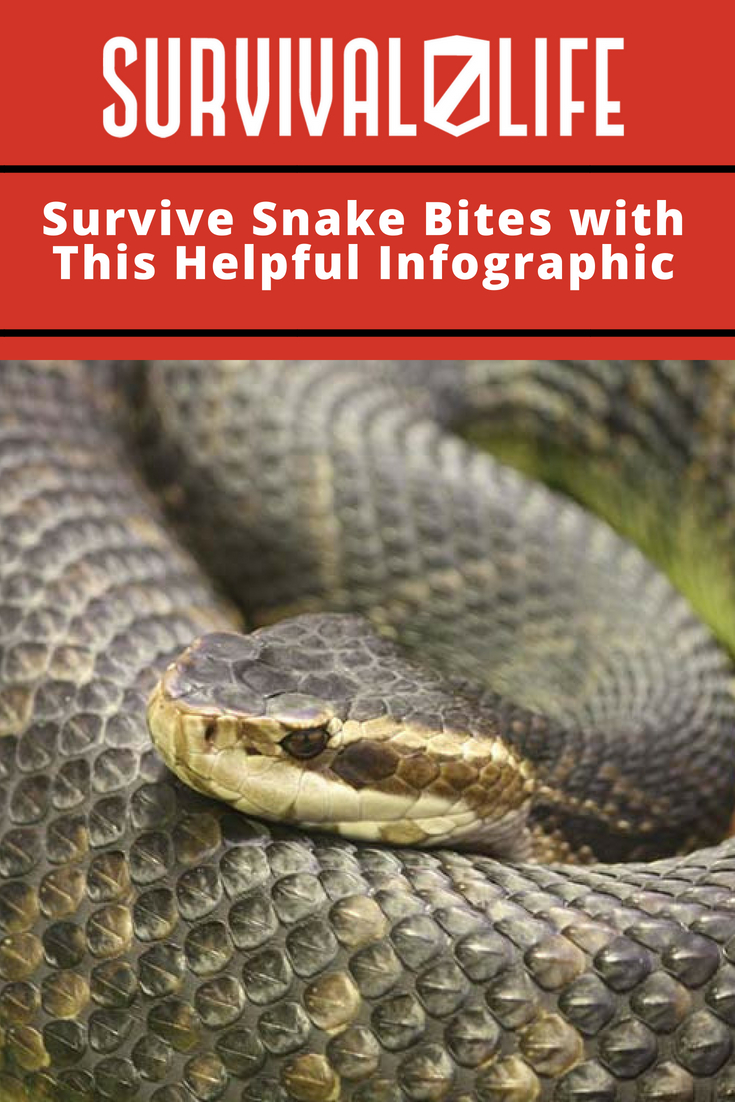 Check out Survive Snake Bites with This Helpful Infographic at https://survivallife.com/snake-encounter-survival-tips/