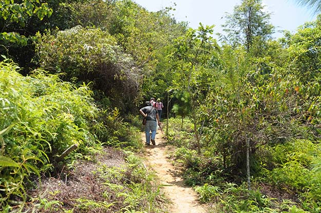 Hiking in a dense wooded area can often lead to a tick infestation.