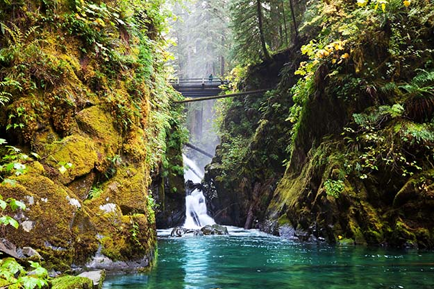 A waterfall inside a dense forest in Olympic National Park, Washington, USA.