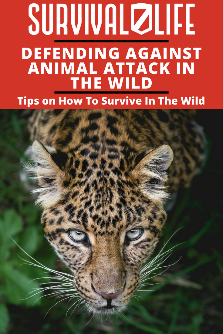 Check out Tips On How To Survive In The Wild | Defending Against Animal Attack at https://survivallife.com/defending-against-wild-animals/