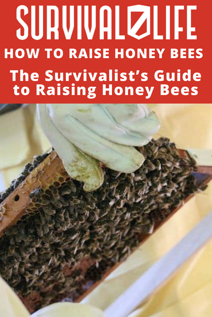 Check out The Survivalist's Guide to Raising Honey Bees at https://survivallife.com/raise-honey-bees/