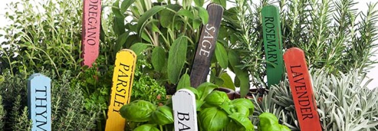Different herbs in the pot | Grow Your Garden All Year Long With An Indoor Garden