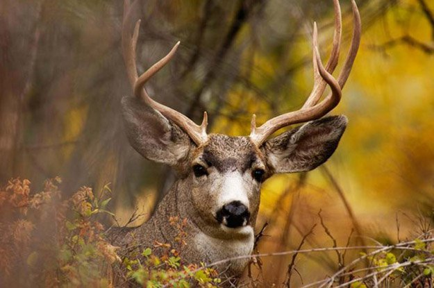1. Deer Hunting Season | Delaware Hunting Laws and Regulations