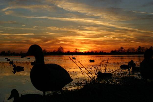 2. Duck Hunting Season | Delaware Hunting Laws and Regulations