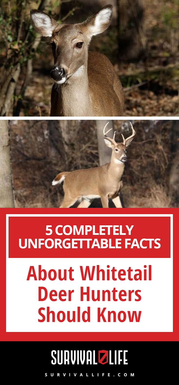 Completely Unforgettable Facts About Whitetail Deer Hunters Should Know | https://survivallife.com/facts-about-whitetail-deer/