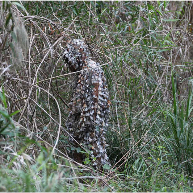 Avoid patterns and shapes | 5 Ways To Maximize Camouflage Concealment