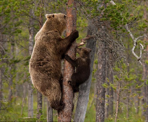 Don't Climb a Tree | How To Survive A Bear Attack