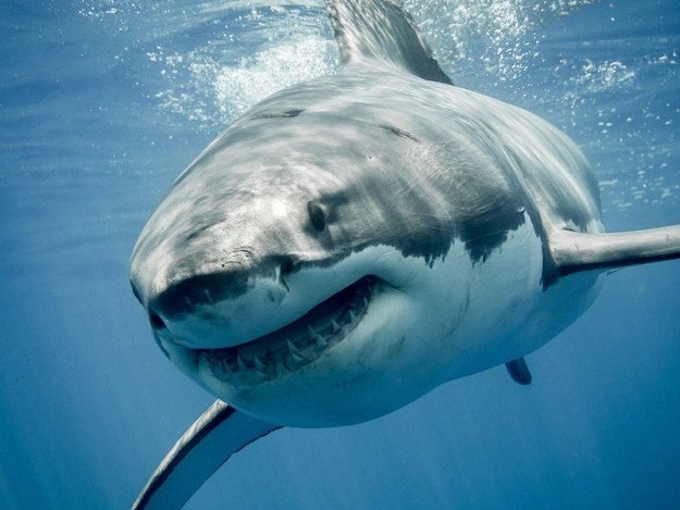 Sharks | Wild Animal Attacks | What To Do When Attacked By Ferocious Beasts