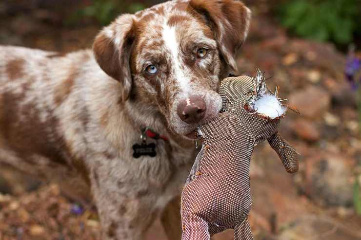 Dog biting a brown stuff toy | Fido On The Hunt: A Complete Guide To Dog Hunting Gear