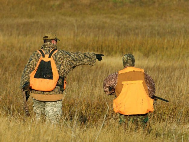Hunt in an Open Land | Practical Quail Hunting Tips Every Hunter Should Follow | how to hunt quail without a dog