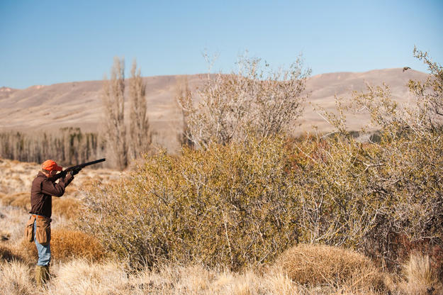 Hunt in an open land   Practical Quail Hunting Tips Every Hunter Should Follow