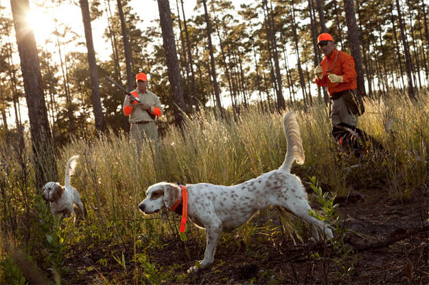 Check the weather | Practical Quail Hunting Tips Every Hunter Should Follow
