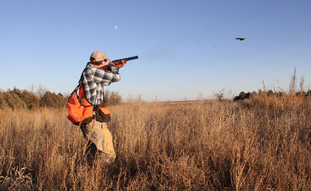 Hunt in late season | Practical Quail Hunting Tips Every Hunter Should Follow